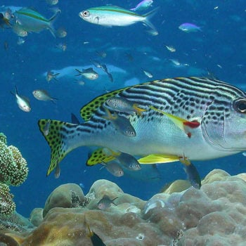 Great Barrier Reef Marine Life