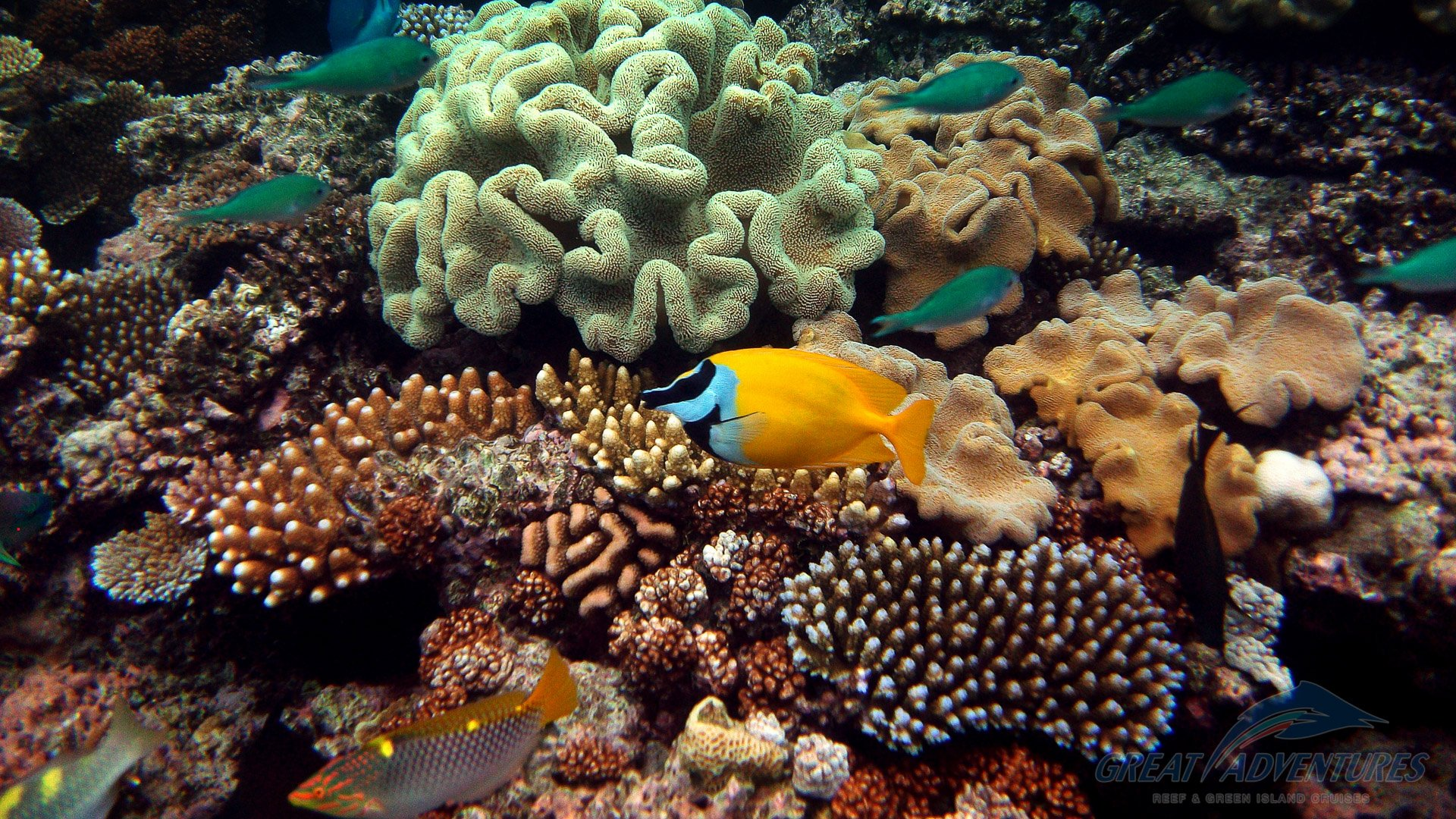 Great Adventures Green Island And Outer Reef