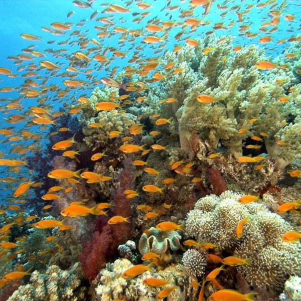 Outer Reef Marine Life