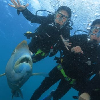 Great Barrier Reef Introductory Diving