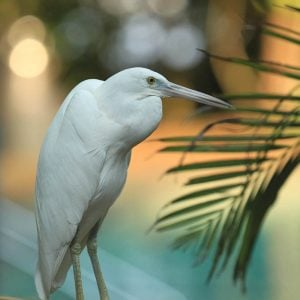 gi-tour-green-island-birdlife-01