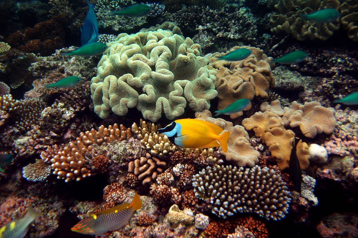 snorkel the great barrier reef great adventures cruises great