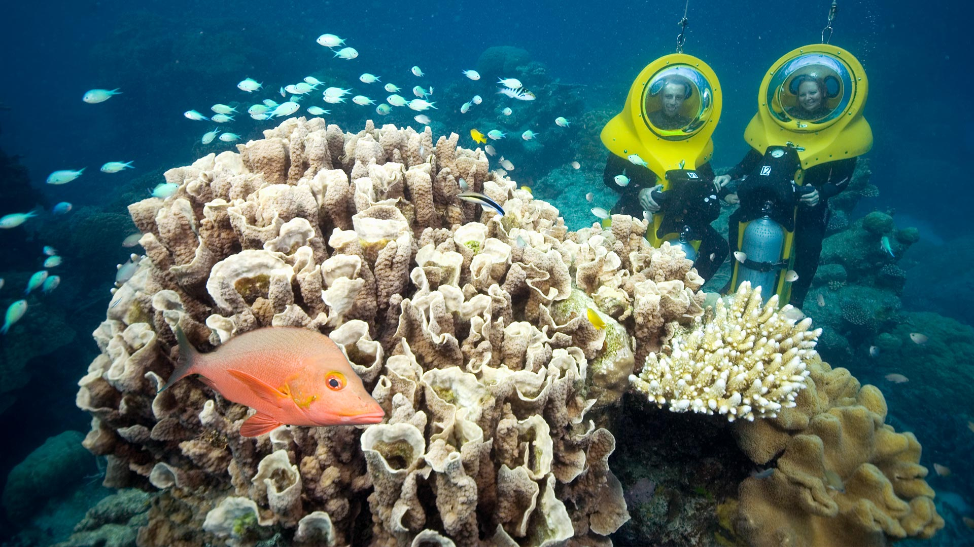 Scuba Doo on the Great Barrier Reef